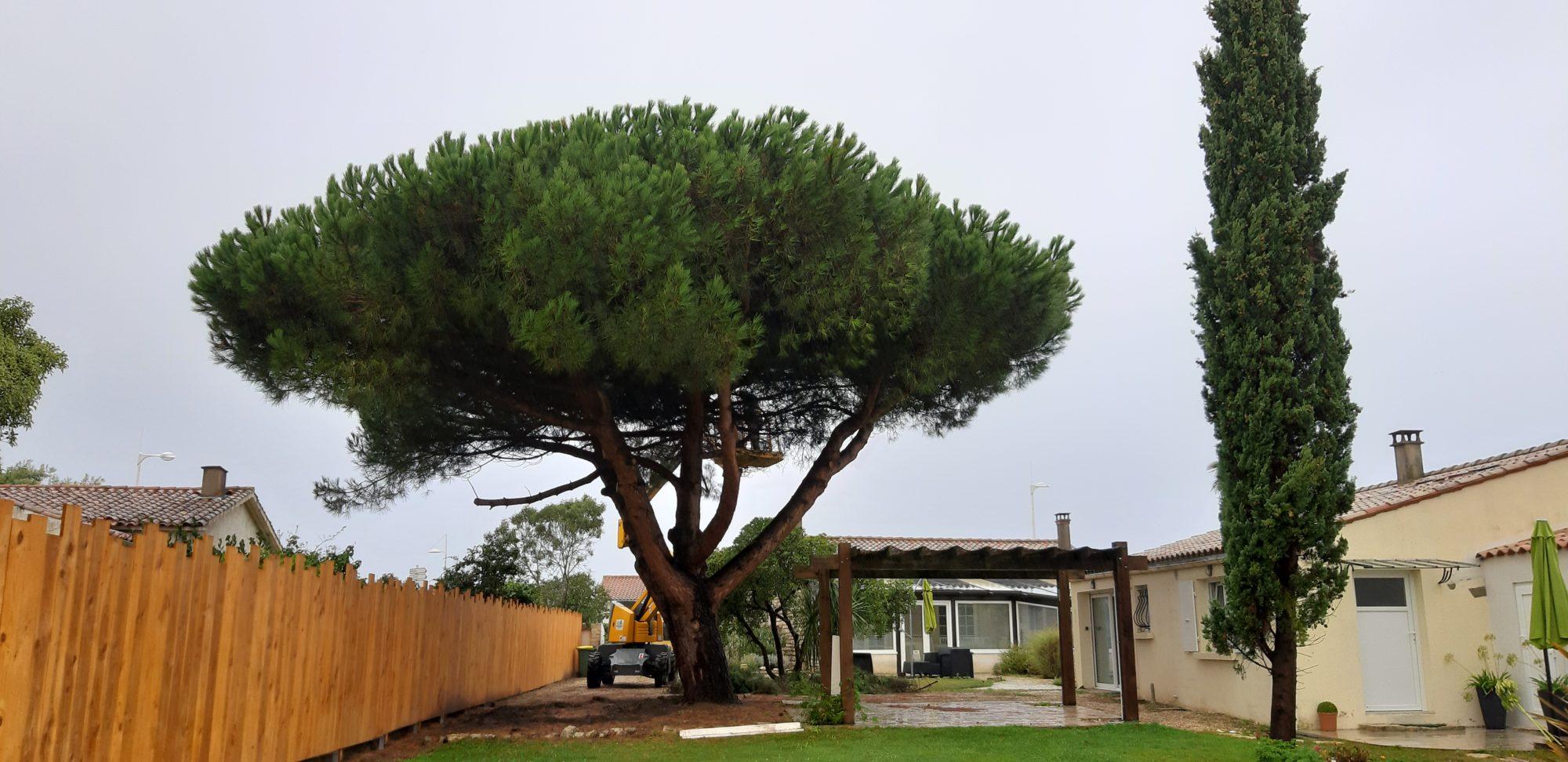 Abattage arbre Oléron